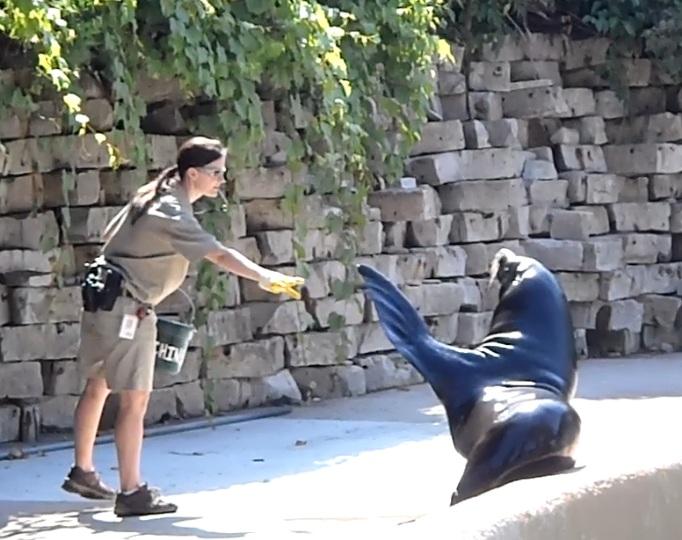 zoo internship